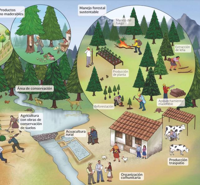 Estrategia Nacional para la Reducción de Emisiones por Deforestación y Degradación de bosques y selvas (Enaredd+)